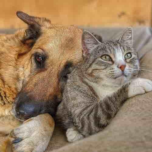 Ottieni fino a 3 preventivi per la cremazione del tuo animale domestico